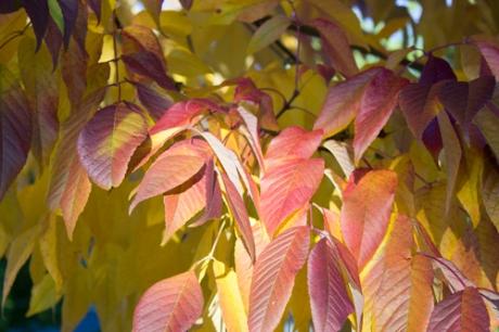 leaves_IMG_0075